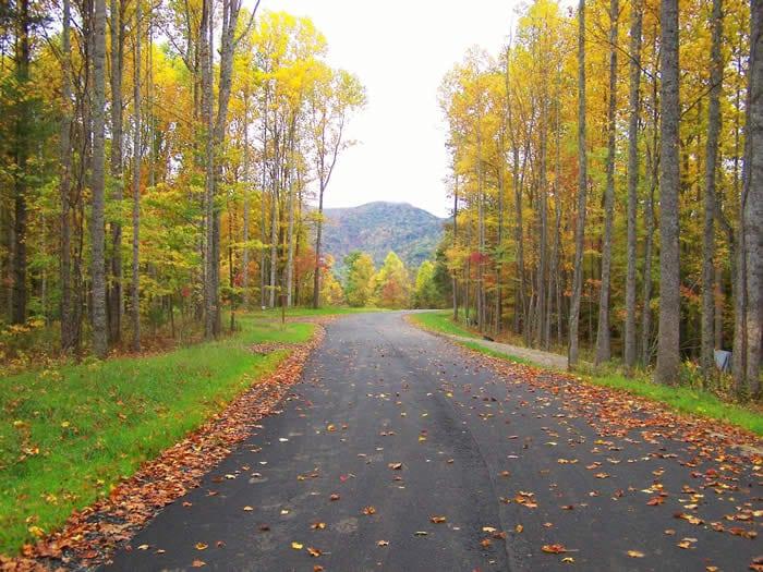 Ashe County Woodlands Autumn