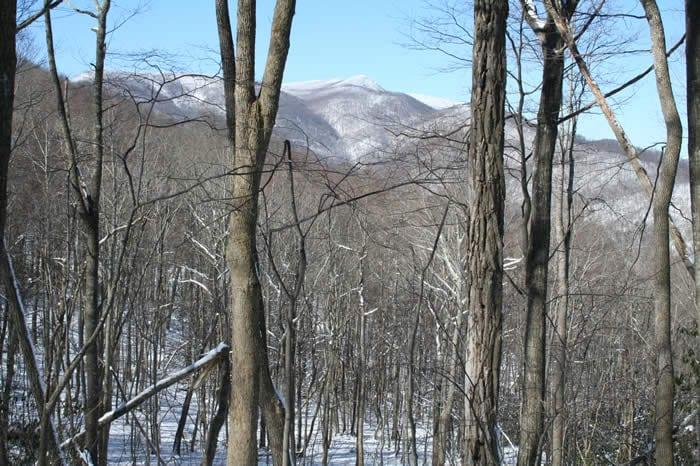 Woodlands Winter View